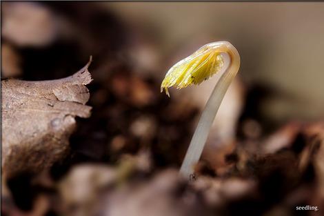 seedling-1284663_1280