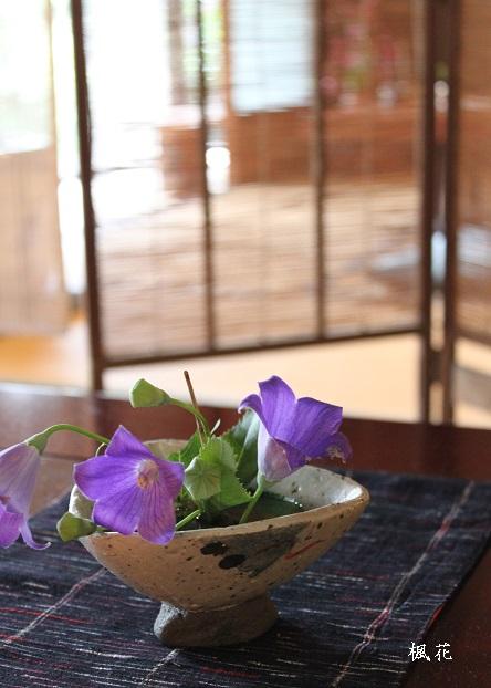 楓花の花3