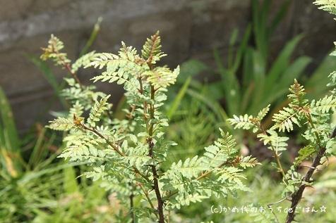 $かめ代オフィシャルブログ「かめ代のおうちdeごはん」Powered by Ameba-木の芽