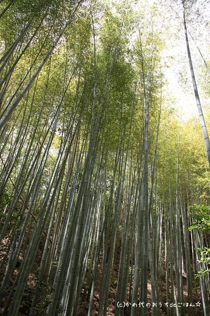 かめ代オフィシャルブログ「かめ代のおうちdeごはん」Powered by Ameba-実家の竹林
