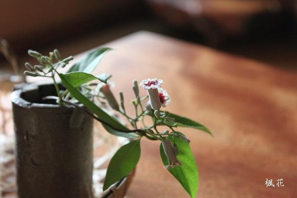 楓花の花4