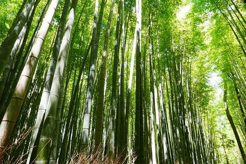 bamboo-2074751_640
