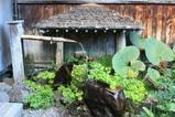 蔦温泉 入り口の湧水
