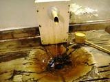 ホテルニューツルタ 浴室飲泉