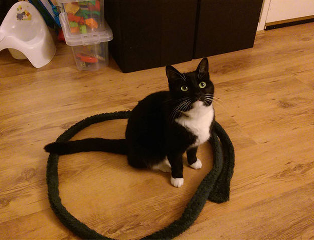 2292236_how-to-trap-a-cat-circle-15