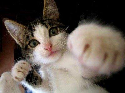 猫パンチとかいう威力1の攻撃wwww