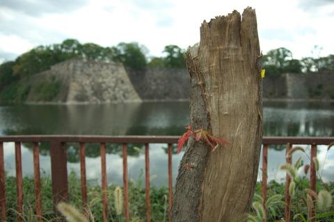 台風で折れた木ですが…