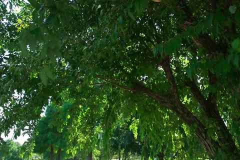 こんな木陰の下で…