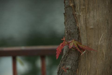 残った葉っぱが…