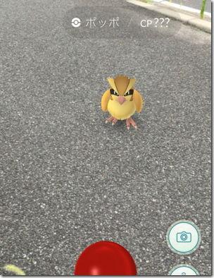 Pokemon GO ポケモンGO ポッポ