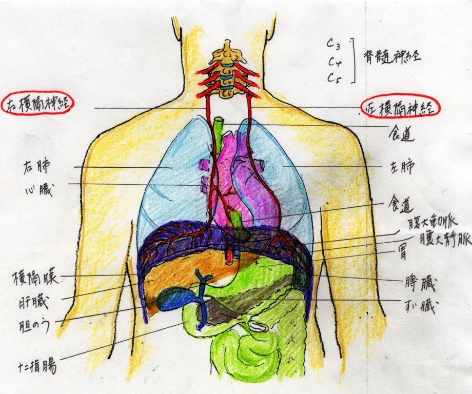 源流治療 その2 呼吸不全 : 魔法のカムラック