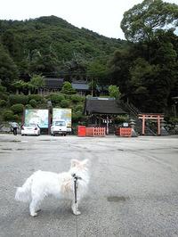 白髭神社(11)