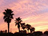 竜洋海洋公園 夕陽とパームツリー
