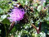 志原海岸の花と昆虫