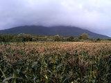 雲に隠れる岩木山ときみ畑