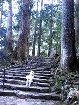 那智の大滝(石段)