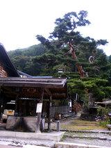 奈良井宿(松の木)