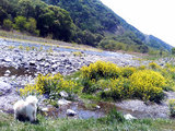 信州蔦木宿の河川敷