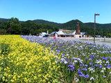 お花畑の向こうに道の駅