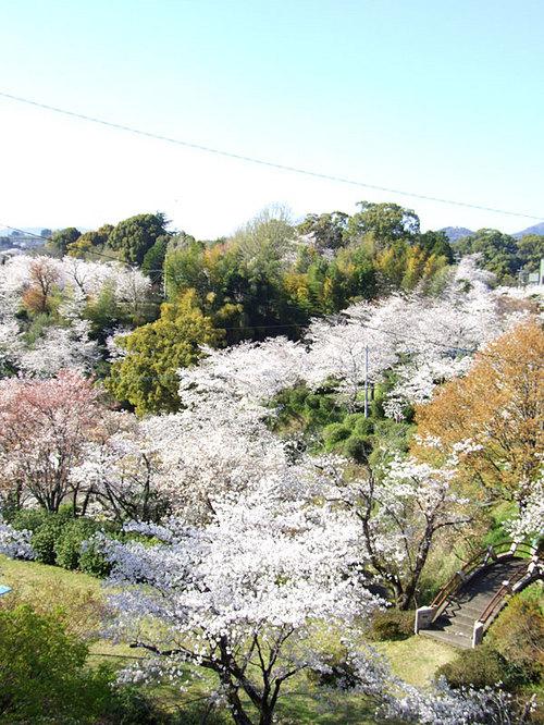 菊池の桜2010-10