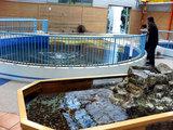 『ウミガメ資料館』の内部