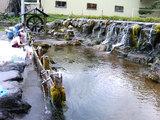 ニセコの湧水