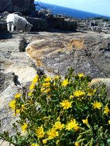 三段壁(花とマリリン)