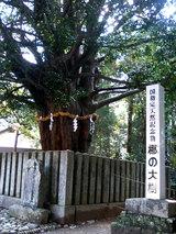 速玉神社(梛の大樹)