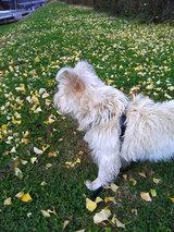 マリリンと芝生とイチョウ
