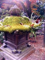 春日大社(石灯籠と苔)