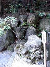 多度大社(さざれ石)