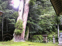 波爾布神社(3)