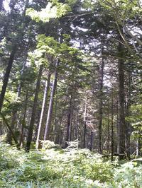 川湯の森(4)