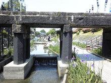 高瀬裏川花しょうぶ(石橋)