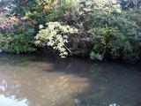 浮島の森(池?)