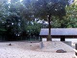 鹿島神宮 鹿園