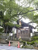 将軍木の枝が!(2)