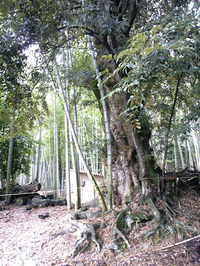 白髭神社(6)