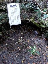 浮島の森(蛇の穴)