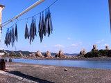 橋杭岩(魚の干物と)