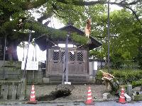 将軍木の枝が!(1)