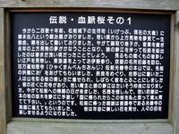 松前(15)