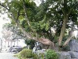 本妙寺公園(1)