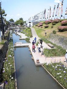 高瀬裏川花しょうぶ(1)