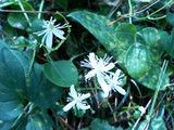 岩井崎に咲く花