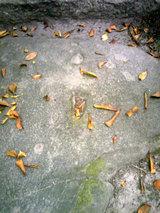 こも神社(水神様の足跡2)