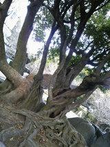本妙寺公園(4)