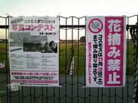 『ごか』のコスモス畑(1)
