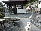 泉神社の湧水(2)