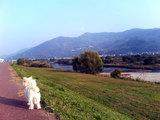 河川敷をお散歩